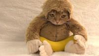 Bu Sevimli Kedi Bakın Ne Yapıyor…