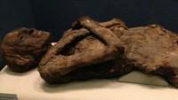 2 Bin 500 Yıllık Mumyaya Tecavüz Etti