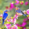Bahar alerjisi ve kaşıntılar