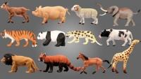 Bu 5 Hayvanı Nasıl Sıralardınız?