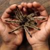 Tarantula Zehri Bakın Neye İyi Geliyor…