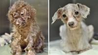 Kurtarılan Köpekler ve Son Halleri