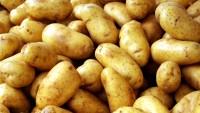 Patates Mucizesi