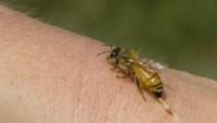 Böcek zehirlenmelerine karşı ne yapmalı?