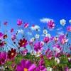 Baharın renklerini makyajınızda kullanın!